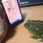 Жаба и Android!